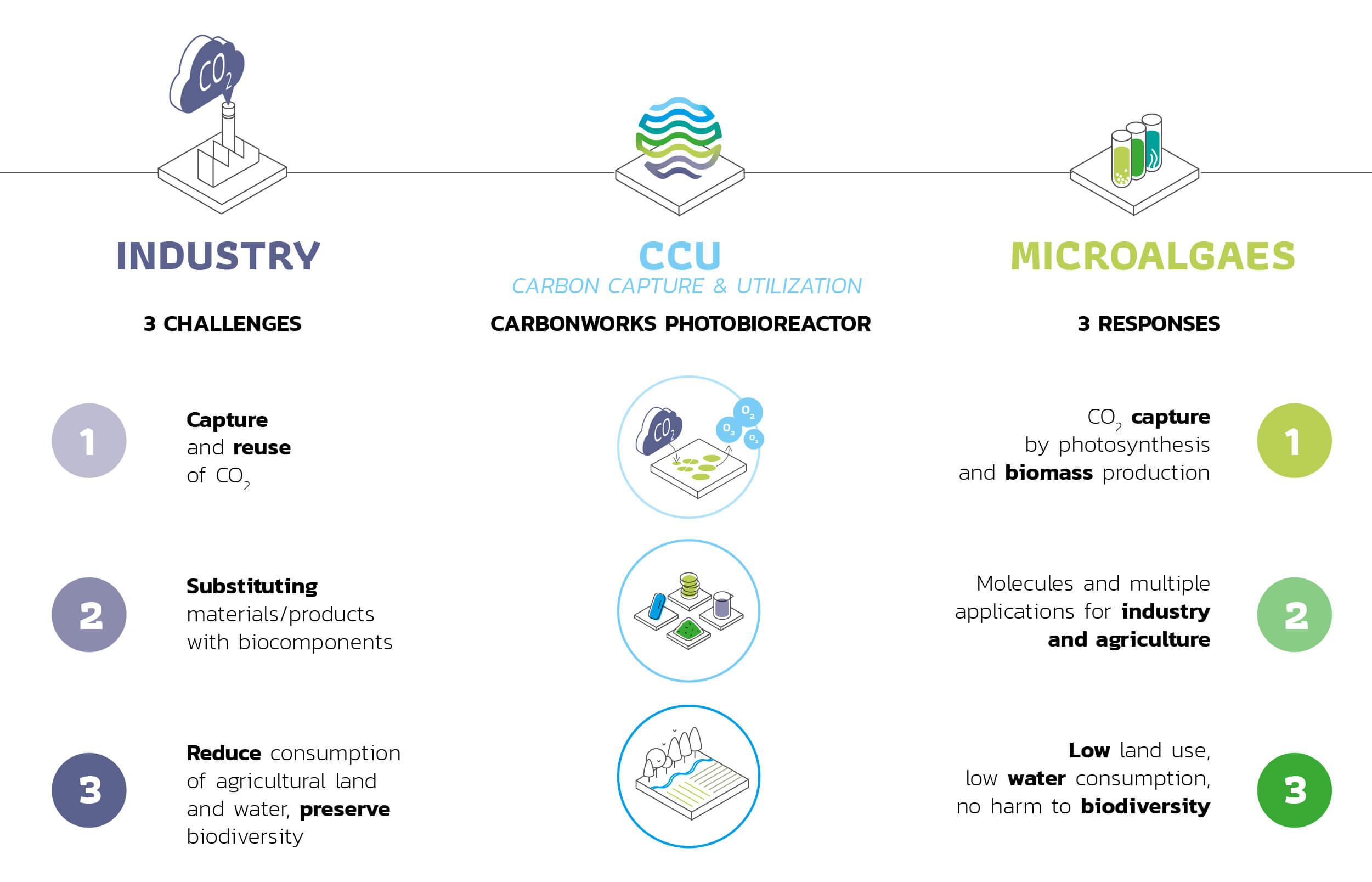 Why microalgaes