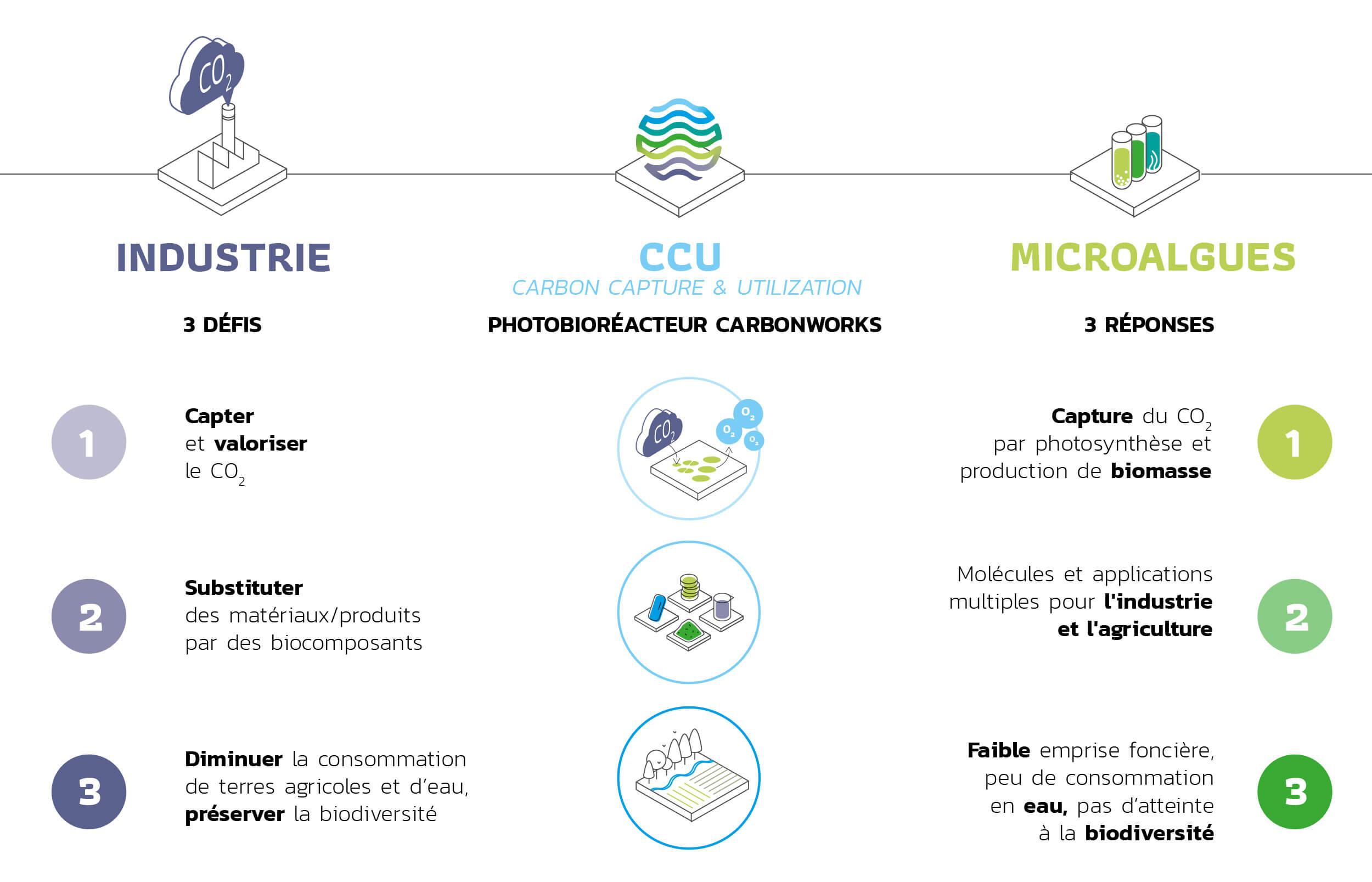Pourquoi les microalgues